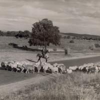 Biblical Pastoring: The Pastor's Unique Role